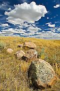 Native prairie grasslands  (West Block) <br /> Grasslands National Park<br /> Saskatchewan<br /> Canada