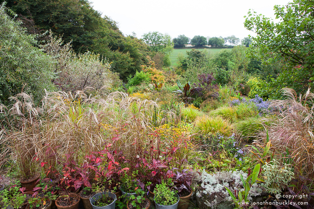 Autumn at Glebe Cottage with Miscanthus sinensis 'Flamingo' in the foreground