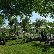 20210515 Tree Philly jpg1