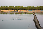 Fish jumping across the water at a fish farm on the 2nd of October 2018 in Satkhira District, Bangladesh. Satkhira is a district in southwestern Bangladesh and is part of Khulna Division. It's main contributors to the economy are shrimp, fish and paddy farming. It is on the bank of the Arpangachhia River. (photo by Andrew Aitchison / In pictures via Getty Images)