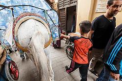 Horse in market, Fes al Bali medina, Fes, Morocco