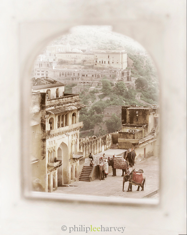 View of working elephants used to transport tourists to the Amber Palace, Jaipur, Rajahstan, India