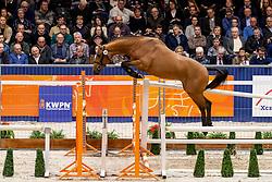 046, Little Pony<br /> KWPN Hengstenkeuring - 's Hertogenbosch 2019<br /> © Hippo Foto - Dirk Caremans<br /> 31/01/2019