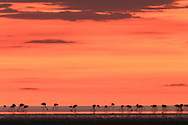 Flamingos bei der Sowa Pfanne in Botswana. Flamingoes at Sowa pan in Botswana.