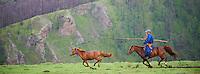 Mongolie, Province de Ovorkhangai, Vallee de l'Orkhon, campement nomade, rassemblement des chevaux // Mongolia, Ovorkhangai province, Okhon valley, Nomad camp, Rallying of horses drove