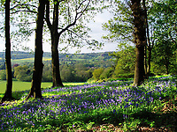 The Tillingbourne Valley, Surrey,UK during Spring with a bluebell wood. View across the village of Chilworth towards the Chantries and St.Martha's Hill.