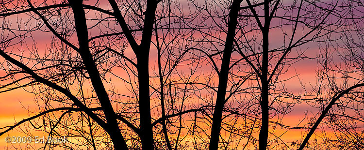 sunset clouds through a slihouetted tree on the Skagit River delta, Washington, USA