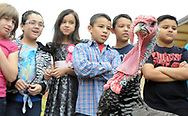 Robin Zielinski – Sun-News<br /> Hermosa Hights Elementary School students get a close up look at turkeys on Tuesday at their school. Two turkeys were on hand, one male and one female, for the kids were able to take notes, compare and contrast while preparing for Thanksgiving.