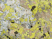 Yellow lichen makes patterns on an alpine rock in Engadine, Switzerland, the Alps, Europe.