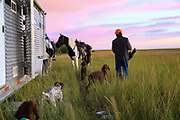Readying the gear at daybreak during a Montana prairie grouse hunt on horseback.