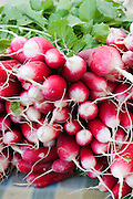 A bunch of fresh radishes at a Farmers Market in Seattle, Washington. Missoula Photographer