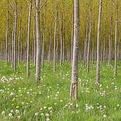 Forest Seasons