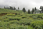 Darjeeling, West Bengal, India Mountain landscape