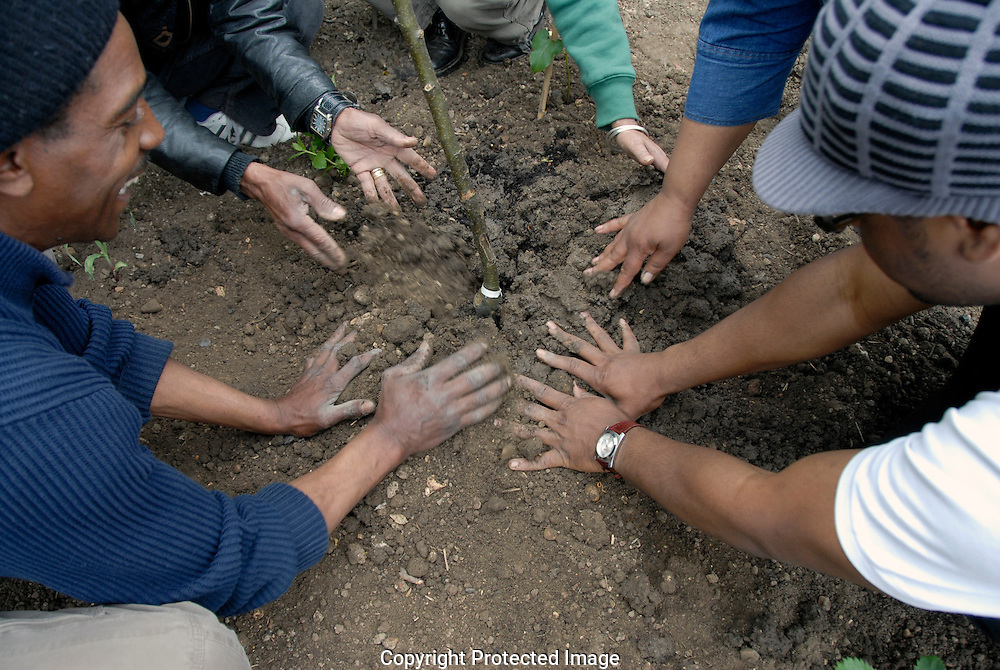 Tree planting ceremony of many hands