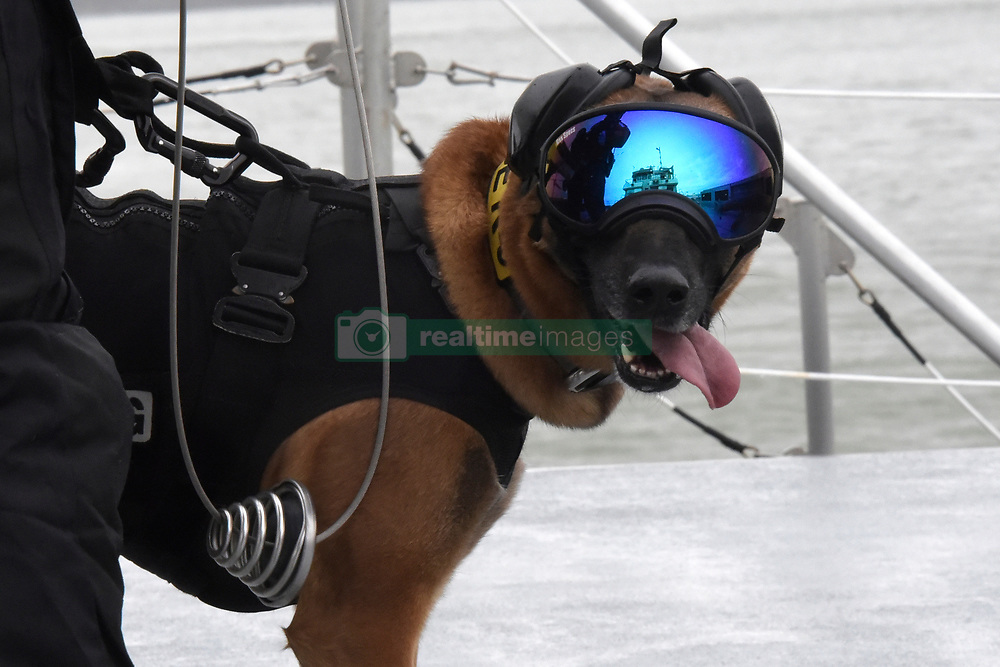March 22, 2019 - San Francisco, California, U.S. - Petty Officer 1st Class Jordan Brosowski, a maritime enforcement specialist, and his partner Ricky, an explosive detection canine, assigned to Maritime Safety and Security Team 91105 in Alameda, Calif., conduct hoisting exercises with aircrew members from Air Station San Francisco in San Francisco Bay, March, 22, 2019. Brosowky and Ricky train to operate in various conditions, whether on a ferry, at the pier, or being hoisted from a helicopter on to a boat. (Credit Image: ? U.S. Coast Guard/ZUMA Wire/ZUMAPRESS.com)