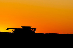 Corn or Maize is picked or harvested by a large farm implement known as a combine from a field in central Illinois at sunset