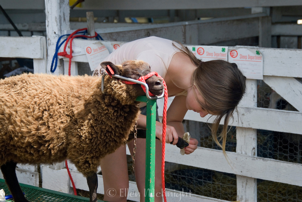 Girl Filing the Hooves of a Sheep in Preparation for 4H Livestock Show at the Columbia County Fair in Chatham, NY