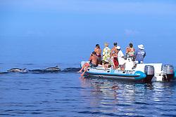 Observing Spinner Dolphin