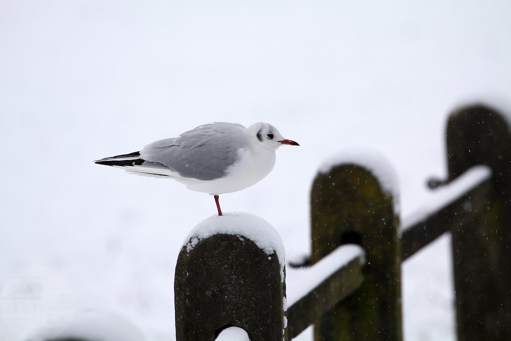 Een meeuw zit op een hek in de sneeuw in het Sonsbeekpark in Arnhem.<br /> <br /> A gull is sitting on a fence in the snow at the Sonsbeekpark in Arnhem.