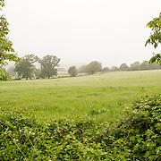 A lush field in the Cotswolds, outside Painswick.