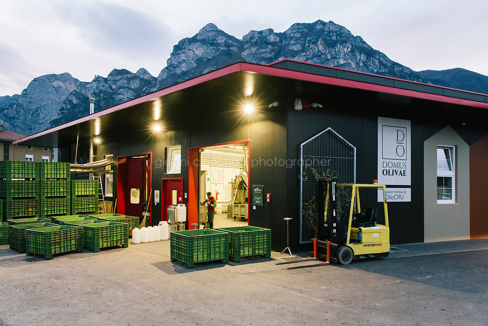 RIVA DEL GARDA, ITALY - 27 NOVEMBER 2018: Domus Olivae, a state-of-the-art olive mill in Riva del Garda, a northern town on the northern shore of Lake Garda, Italy, on November 27th 2018. It uses the latest technology in which olives crushed by stainless-steel grinders produce a paste that is then whirled in a centrifuge, yielding a clear oil that expresses the intense flavors of the fruit. <br /> <br /> Lake Garda, Italy's largest lake, is an odd micro-biome of Mediterranean olive-oil culture in the midst of frost-prone, butter-oriented Lombardy. Though its northern extreme is at the same latitude as Fargo, North Dakota, Garda's shores are girded by lemon and palm trees, as well as olive orchards, which climb the hillsides that surround the lake to heights of 1,500 feet. Lake Garda, overlooked by the Dolomites, snowcapped in early winter, is the northernmost point in the world where olives can be reliably cultivated. Lake Garda, where there is a record of uninterrupted cultivation since the thirteenth century, has a reputation for producing delicate, mild-flavored oils that has pleased more conservative northern European palates since the Renaissance.<br /> In contrast to Spain, France, and Greece, where a few star cultivars dominate production, Italy, with its multiplicity of soils and microclimates, has always been the Amazonian rainforest of olive biodiversity. Every year, the fruit from 179 million trees—three for every man, woman, and child in the nation—is gathered by 825,000 separate cultivators, to be pressed in 4,900 mills. At last count, there were 530 distinct olive varieties in Italy.