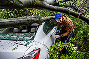 Aaron Terberg, 33, of downtown Sacramento, pushes through branches of a tree that fell and shattered glass on his car last night during the storm in Sacramento on Wednesday, Jan. 27, 2020. Terberg said he is looking for important things like his insurance documents.