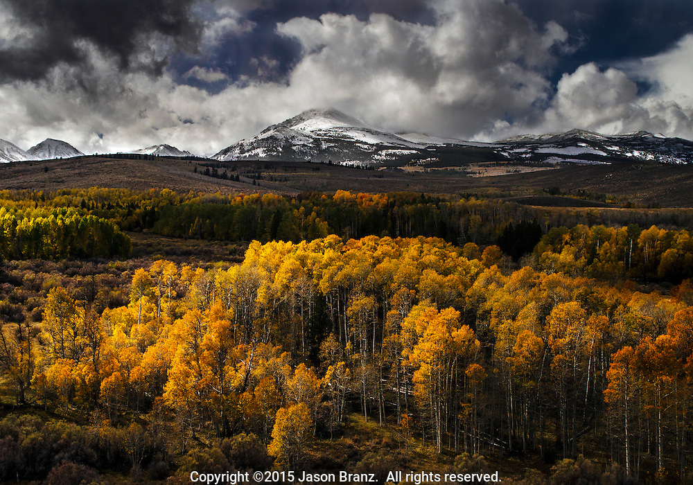 Aspen trees and late autumn snow, Conway Summit, Mono County, California.