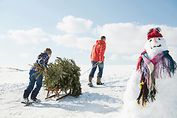Father and son pulling spruce on sledge, Bavaria, Germany