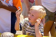 Young scientist age 4 examining seashell at hands-on wildlife artifacts booth. Aquatennial Beach Bash Minneapolis Minnesota USA