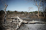 Mozambique has had a big area of forest. Today this area is decreasing quicly due to the hight level of deforestation. The cause of the deforestation or several: the fires used to create agriculture areas, the ones used for illegal hunting and of course the cut of the tree for the wood industry. The number of Chinese wood buyers multiply in the last year but they are not directely responsable for the big deforestation occuring, in fact the real cause are the lack of clear laws and the hight level of coruption between the officers that should control the forests. A burnt area. Fires are used to create agriculture areas, by illegal hunter to find the animals and by woodcutters to find the best trees to cut.