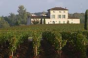 Vineyard. Chateau Lafleur. Pomerol, Bordeaux, France