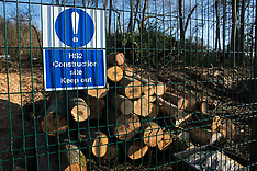 2021-02-28 HS2 tree felling in Wendover