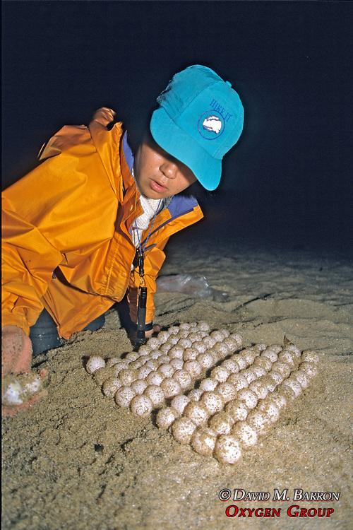 C. Shikauchi Retrieving Turtle Eggs