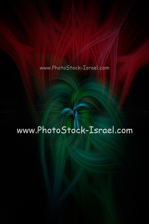 twirled, motion blurred, Studio photography, of vibrant red tulips on black background