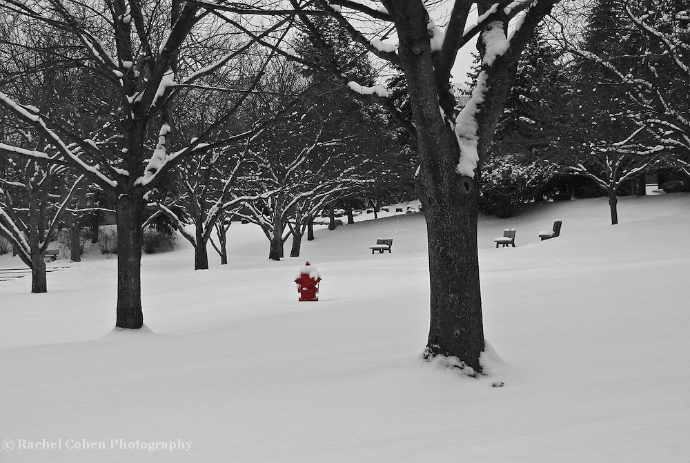 """""""Little Red"""" 2 SC<br /> <br /> A wonderful bright red fire hydrant shines in this beautiful snowy winter scene done in black and white with selective red on the fire hydrant!!<br /> <br /> Winter in Michigan by Rachel Cohen Winter in Michigan!<br /> <br /> Beautiful winter scenes, winter wonderlands, and lone trees in winter!<br /> <br /> Images in color, B&W, and using selective color.<br /> <br /> If you love winter, snow, trees, rolling hills, and lone trees then you'll find a lovely selection!! <br /> <br /> Winter in Michigan by Rachel Cohen"""