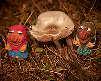 Mushroom Hunting Trolls found a Big One. Image taken with a Leica CL camera and 55-135 mm lens (ISO 100, 135 mm, f/4.5, 1/500 sec).