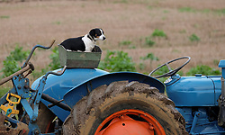 © Licensed to London News Pictures. <br /> 30/11/2014. <br /> <br /> Boulby, United Kingdom<br /> <br /> A Jack Russell sits on a box on the back of a tractor during the ploughing match that takes place each year on fields next to the picturesque Yorkshire coastline near Staithes. Farmers attend each year to demonstrate their ploughing skills and to help raise money for charity with proceeds from this year going to Charlie Brown Cancer Care in Newcastle.<br /> <br /> <br /> Photo credit : Ian Forsyth/LNP