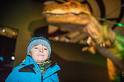 NO FEE PICTURES<br /> 17/12/17 Vincent Lyons, age 7, Blanchardstown pictured at the prehistoric preview and official opening of Dinosaurs Around The World now open at the the Ambassador Theatre  for a limited time only. Embark on a globetrotting expedition around the world to discover the Age of Reptiles! With advanced animatronics, a multi-layered narrative, fossils, authentic casts, cutting-edge research and immersive design elements you'll experience the Age of Reptiles as it comes to life!  Dinosaurs Around the World is open daily to the public from 10 a.m. with last entry at 6pm for a limited time only. Tickets available from Ticketmaster.ie and from the Ambassador Theatre Box Office now. Visit www.mcd.ie for more. Pictures: Arthur Carron