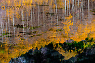 Aspen trees reflect into Maroon Lake in the White River National Forest near Aspen, Colorado, USA