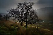 The rain was relentless, coming down in sheets across the sombre Welsh hillsides, soaking the landscape and everything upon it. I'd just walked for hours on the deserted gale-blown mountaintops, alone but strangely happy in my solitude. The river in the valley was swollen, fed by the downpour but tumbled excitedly towards the sea beyond.<br /><br />The steadfast skeletal trees transfixed me. Their bare branches were almost still in the breeze and their water-drop laden twigs stretched out like a delta. These skeletal figures were in a sort of suspended animation, hidden life pulsing through the outstretched limbs but waiting to burst out in the spring, months from now.<br /><br />I didn't really want to leave but my waterproofs were now beginning to fail after almost four hours of penetrating bad weather. I could hear the rain on my jacket hood and tiny beads of water now ran down my skin. It seemed that if I moved I'd ruin the silent connection between me and the trees, but I did, and it didn't.