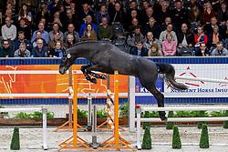 049, Mister Jones<br /> KWPN hengstenkeuring - 's Hertogenbosch 2020<br /> © Hippo Foto - Dirk Caremans<br />  30/01/2020