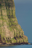 20.07.2008.Hælavikurbjarg seabird cliff.Hornvik, Hornstrandir.Iceland