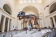 Sightseers view Sue the T-Rex exhibit in the Main Hall of the Field Museum of Natural History in Chicago USA