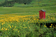 Outhouse in field of flowers near Crested Butte, Colorado