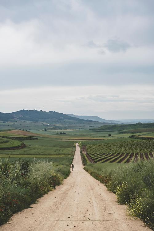 Alex, from the United States, walks uphill on the Camino as he nears the town of Santo Domingo de la Calzada, in La Rioja, Spain. (June 8, 2018)<br /> <br /> DAY 12: NAJERA TO SANTO DOMINGO DE LA CALZADA -- 21 KM