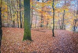 Loch Fiskally Autumnal Colours.<br /> Neil Bain | EEm 4th November 2017.