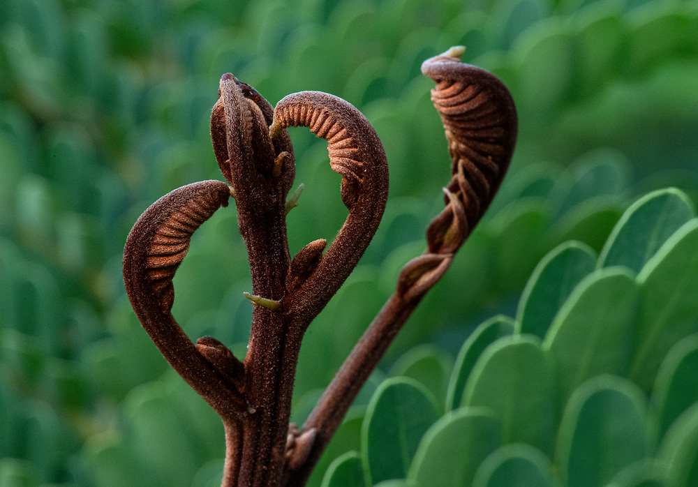Fronds to Come
