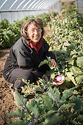 Shari Sirkin with eggplants in greenhouse.
