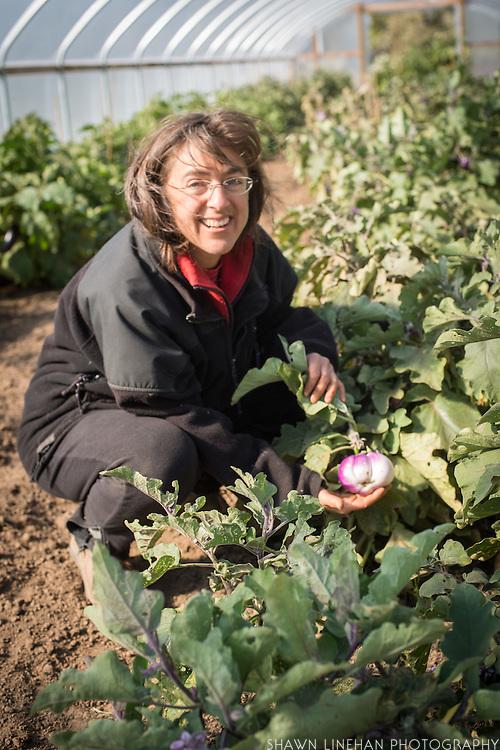 Shari Sirkin with eggplants in greenhouse.