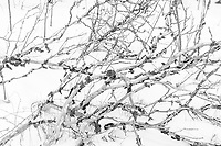 https://Duncan.co/branches-and-snow-abstract